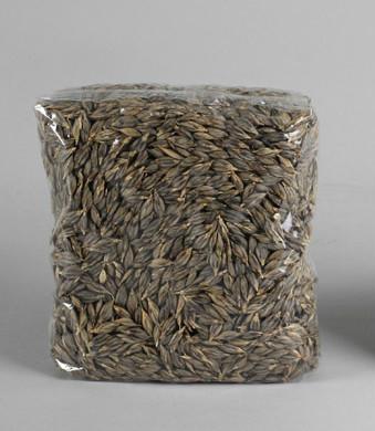 sėklos želmenų auginimui