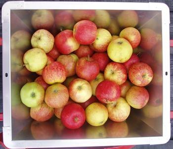 Rankinis obuoliu smulkintuvas